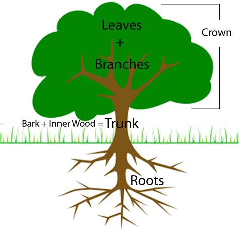 parts of a tree diagram science news