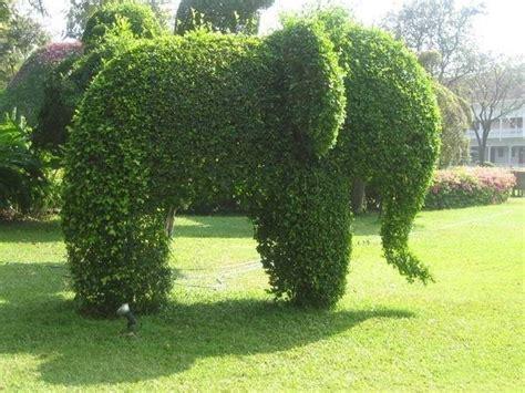 siepe da giardino curare siepi da giardino piante in giardino consigli