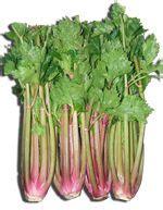 come si coltiva il sedano sedano e sedano rapa propriet 224 e uso alimentipedia