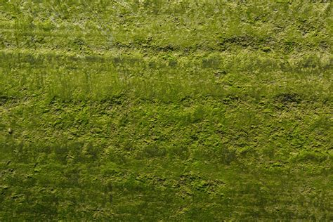 home remedy to kill moss on pavement quickly home guides
