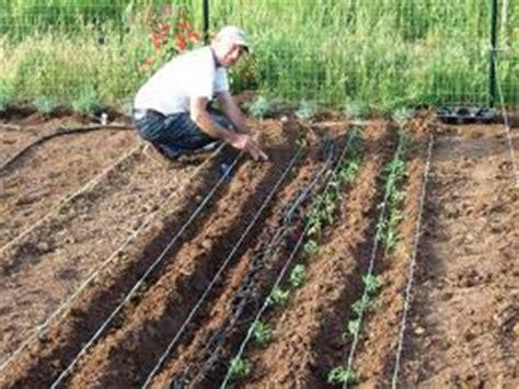 cetrioli come cucinarli agricoltura a tavola preparare l orto in co aperto