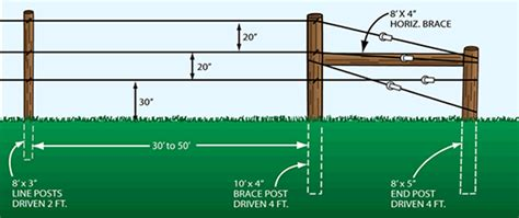 Three Wire Verticle Trellis