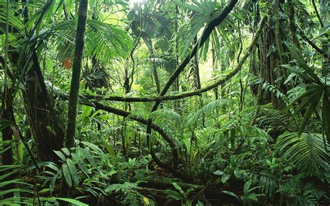jungle wallpaper pinterest jungle images rainforest yahoo image search results