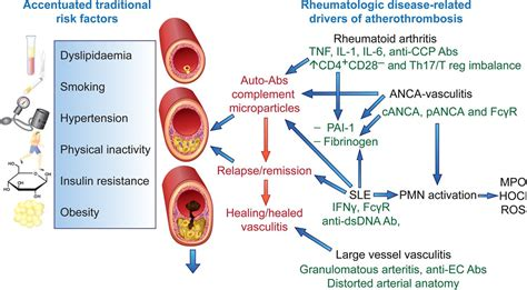design effect of sle inflammation all roads lead to rome vitamin agent