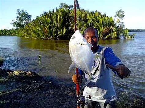 Joran Pancing Untuk Ikan Besar memancing bayi ikan terkulu di sungai salokpalai muara badak