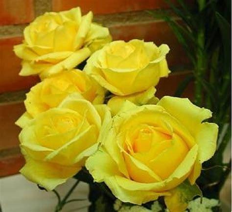 imagenes de flores rosas amarillas s 243 lo el amor salvar 225 al mundo