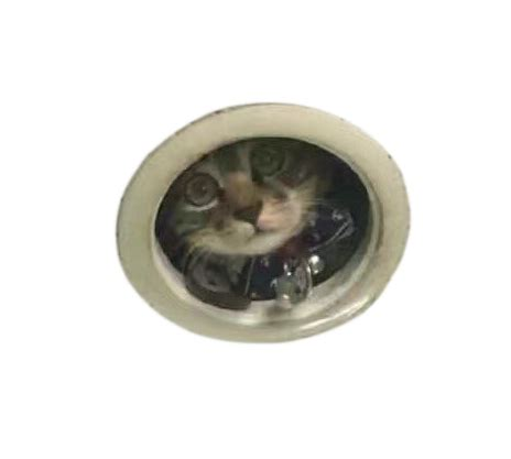 Cat In Ceiling by Spying Ceiling Cat Photoshop Battle Junk Host