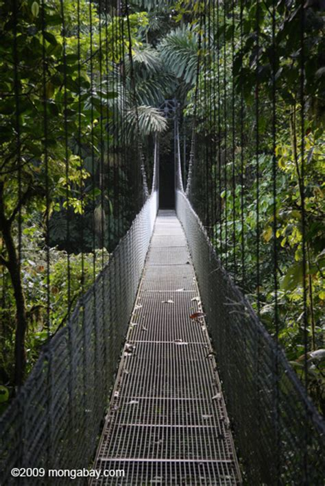 hanging bridges canopy walkway