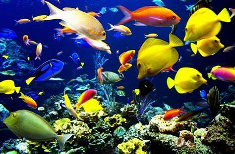 Learn about exotic freshwater fish   Fish compatibility chart   Your