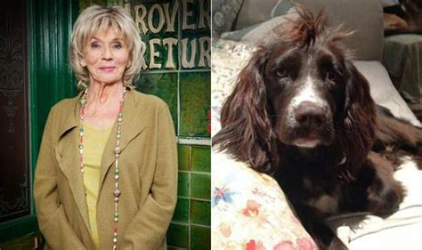 corrie actress dead coronation street star sue johnston devastated after pet