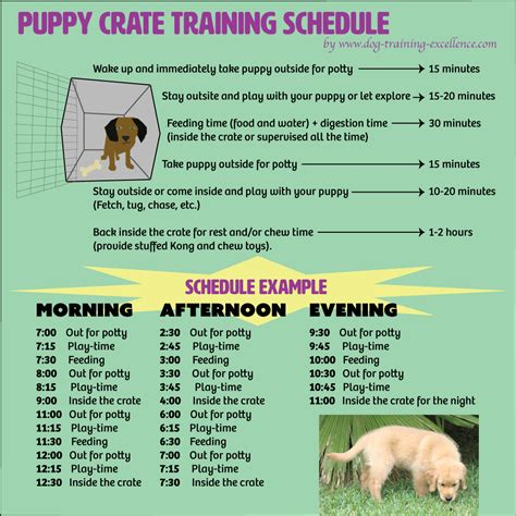 crate training puppy crate training schedule leila pinterest puppy