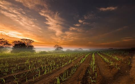 agriculture field amp red sky wallpapers agriculture field amp red sky stock photos
