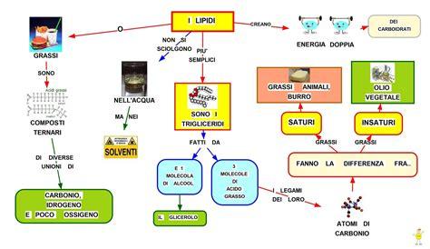 simulazione test d ingresso scienze dell educazione mappa concettuale lipidi studentville