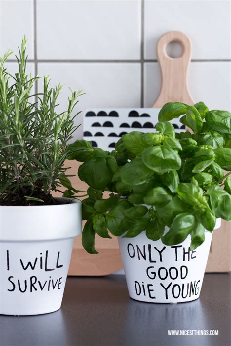 kitchen herb pots vinyldielen in der k 252 che diy k 252 chenhelfer diy