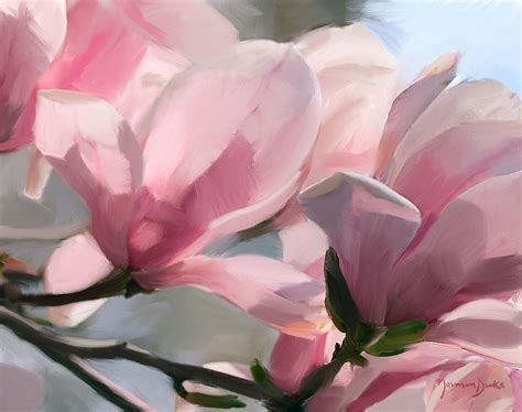 pink magnolia blossoms by norman