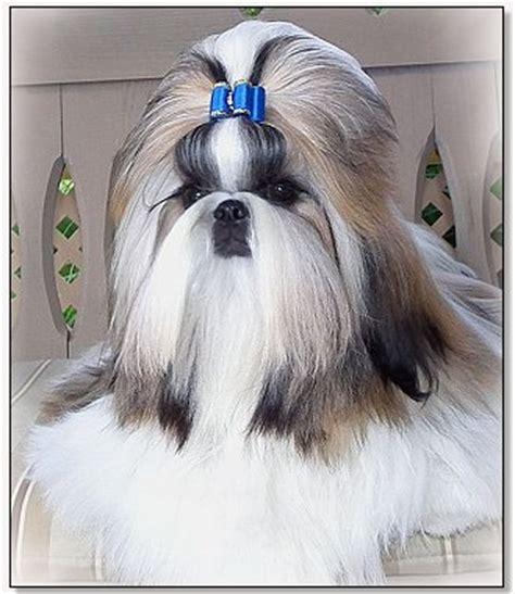 wenrick shih tzu bows by doggie bow ties classic satin show bows