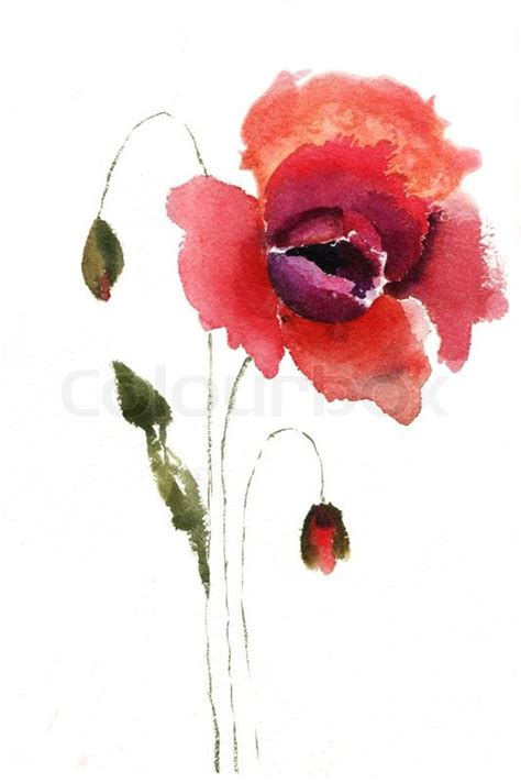 White Textured Vase Watercolor Illustration Of Red Poppy Flower Stock Photo