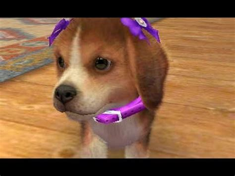 nintendogs and cats golden retriever breeds nintendogs cats golden retriever 3ds gameplay doovi
