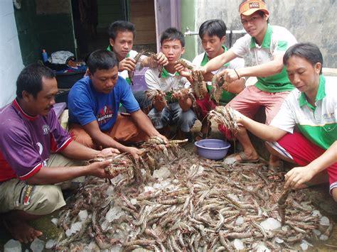 Harga Pakan Udang Windu tutorial budidaya ikan bandeng dan udang windu organik