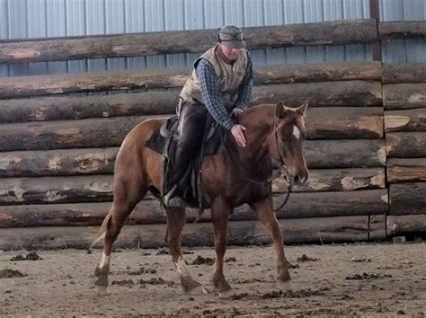 Kickers Colonel two c ranch horses mares