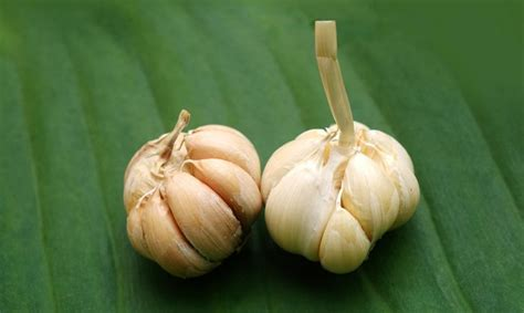 come piantare l aglio in vaso esposizione a nord quali piante usare casafacile
