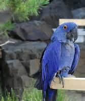 Pet birds for adoption