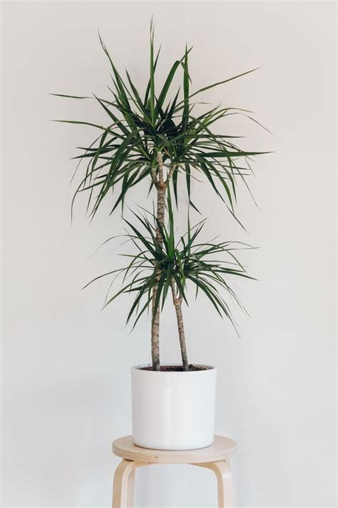 indoor trees that don t need 10 houseplants that don t need sunlight leedy interiors