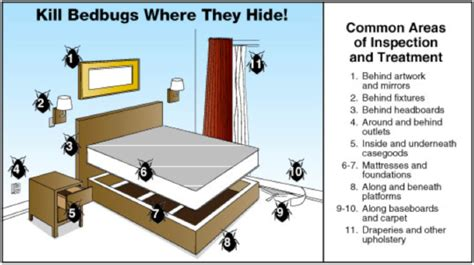 Bed Bug Hiding Places by Find A Bed Bugs Bed Bugs Dead Bugs