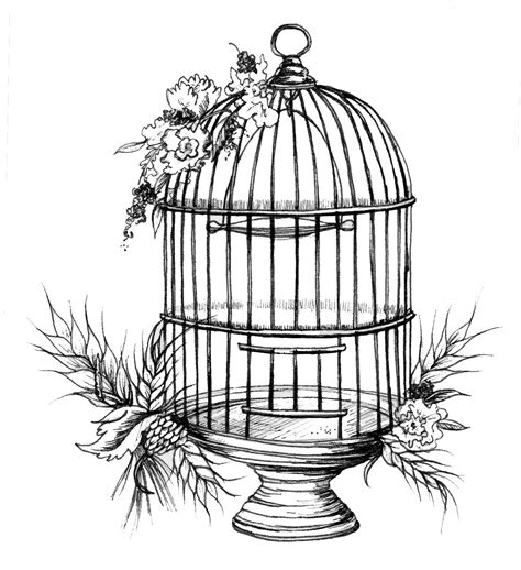 Birdcage Drawing