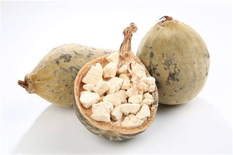baobab fruit baobab seed is the world s oldest living tree and its healing secrets