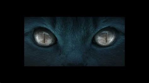 Watch The Cat 2011 The Cat 2011 Youtube