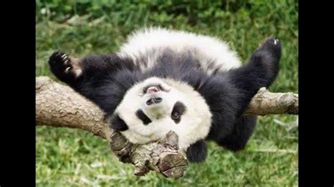 imagenes animales bellos animales hermosos y tiernos youtube