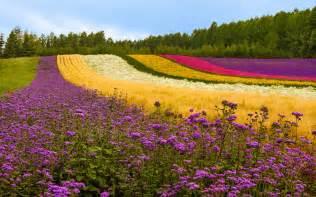 Images Of Garden Flowers Garden Flower Hd Wallpapers