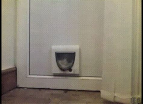 doorway gifs find share on cat gif find share on giphy