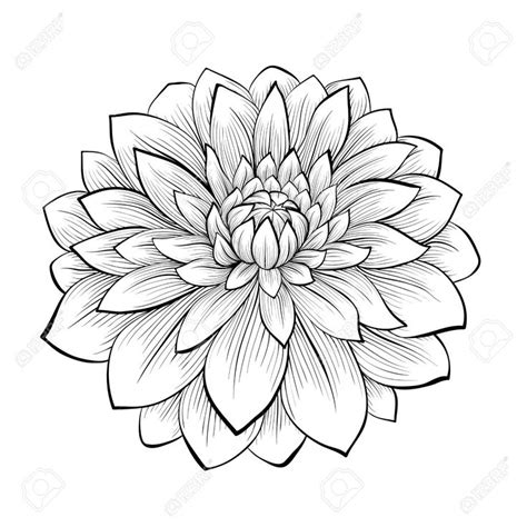 fiori giapponesi disegni 25 best ideas about flower outline on