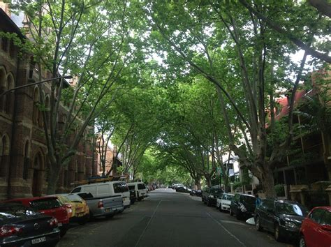 victoria street significant trees