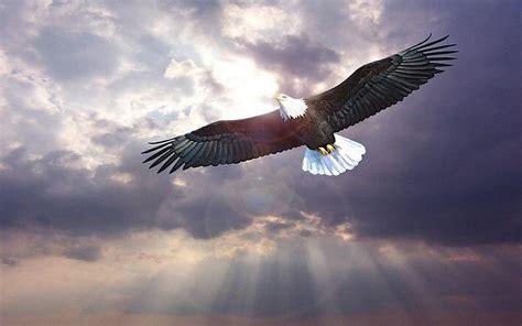 Burung Elang 3d arti mimpi tentang burung elang