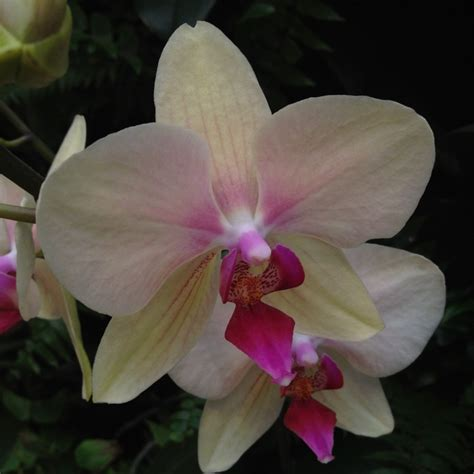 7 interesting facts about colombian orchids colombia 17 best images about flores on pinterest cartagena