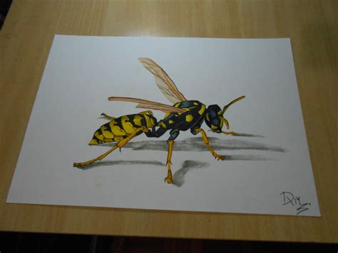 how to draw a wasp drawing 3d illusion by