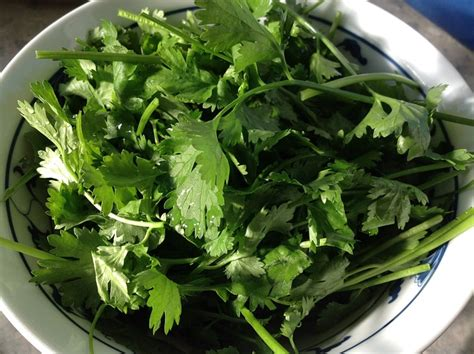 Cilantro Detox Bath by Your Is Overloaded With Toxins How To Use Cilantro