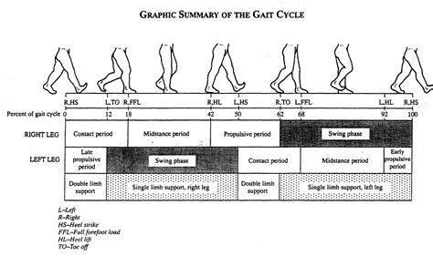 swing phase of gait gait cycle basics part 5 swing phase our final