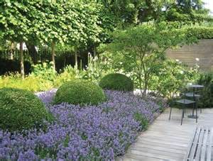 Boxwood Topiary Balls Buxus Balls Simple Garden For E Pinterest Lavender