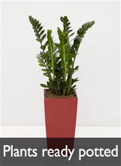 house plants buy online premium indoor plant containers buy online indoor plant pots