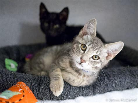 adoption events near me meow cat rescue adoption 13 photos animal rescue shelters 10600 ne 68th st