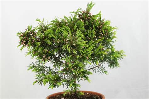 Zimmerpflanzen Palmen Bestimmen 3232 zimmerpflanzen palmen bestimmen zimmerpflanzen bestimmen