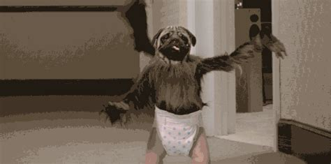 puppy monkey baby gif i really want to shoot puppymonkeybaby in the page 1 ar15