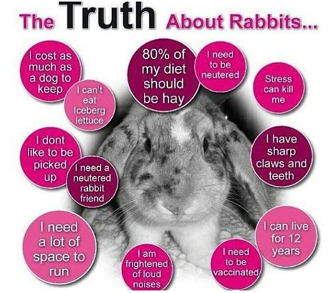 49 best facts info images on rabbits