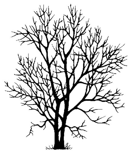 60 ash tree tattoos ideas ash tree silhouette design