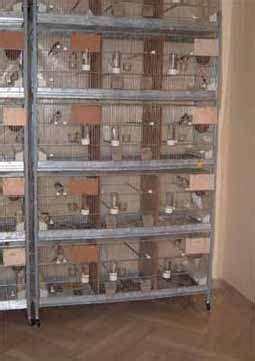 batterie di gabbie mio allevamento