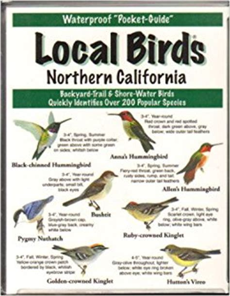 local birds northern california mike spence